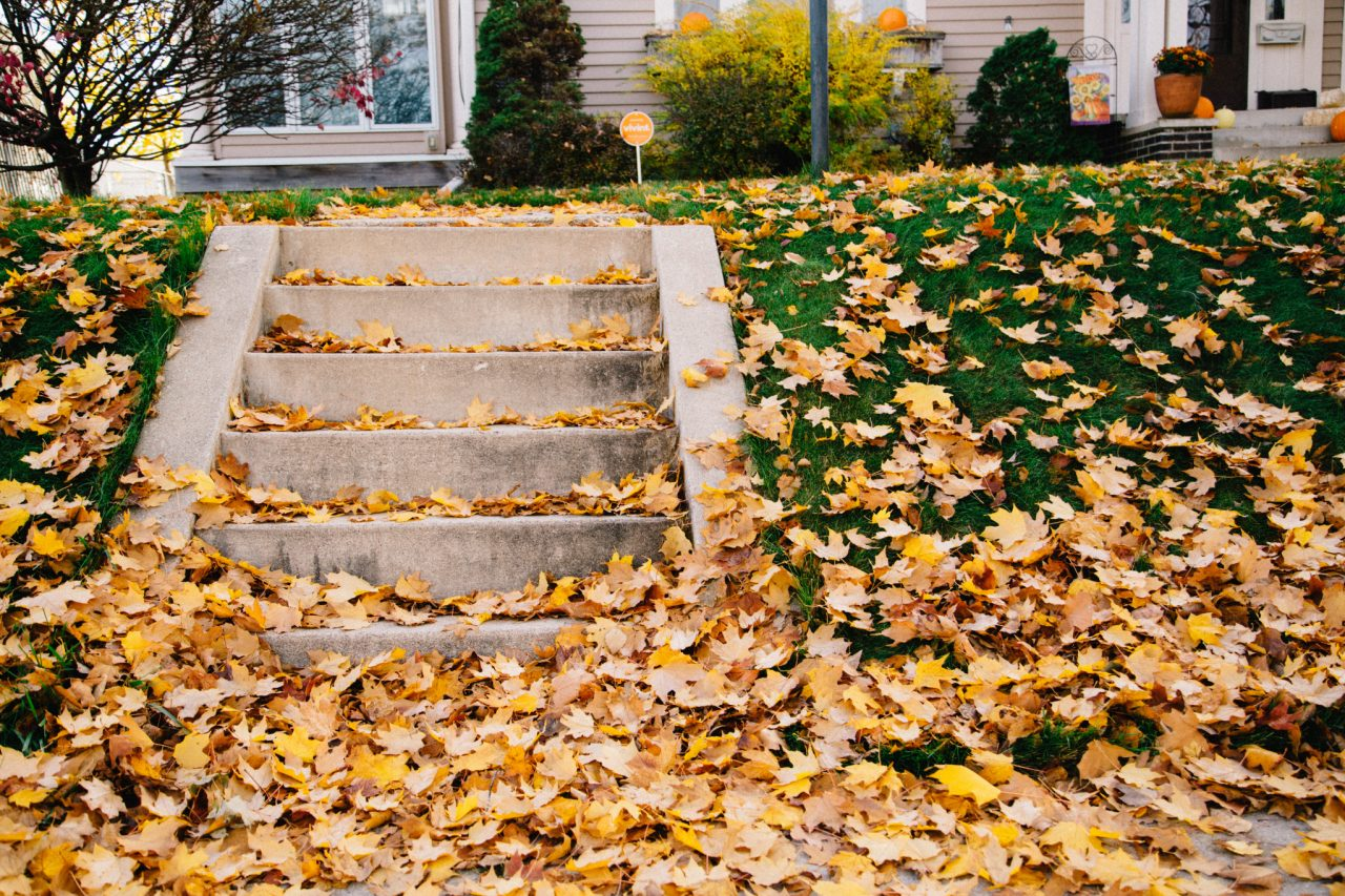https://artisankitchens.ca/wp-content/uploads/2021/09/minnesota-front-yard-fall-beauty_t20_wKW08m-1280x853.jpg